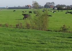 boerderij-staand